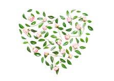 Ρόδινα λουλούδια, πράσινα φύλλα με μορφή μιας καρδιάς σε ένα άσπρο BA Στοκ Εικόνες