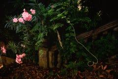 Ρόδινα λουλούδια σε ένα σκοτεινό κλίμα Στοκ εικόνα με δικαίωμα ελεύθερης χρήσης