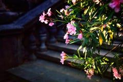Ρόδινα λουλούδια σε ένα σκοτεινό κλίμα Στοκ φωτογραφία με δικαίωμα ελεύθερης χρήσης