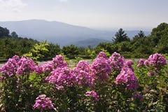 Ρόδινα λουλούδια στα βουνά στοκ εικόνες