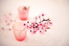 Ρόδινα λουλούδια στο μουτζουρωμένο κλίμα στοκ φωτογραφία με δικαίωμα ελεύθερης χρήσης