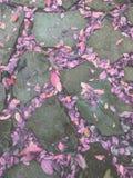 Ρόδινα πορφυρά πεσμένα φύλλα που γεμίζουν με τα χάσματα πλακών πετρών στοκ εικόνες