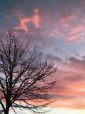 Ρόδινα σύννεφα Στοκ εικόνες με δικαίωμα ελεύθερης χρήσης