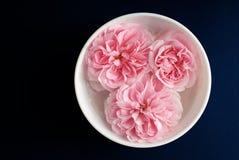 ρόδινα τριαντάφυλλα αρώματος Στοκ εικόνες με δικαίωμα ελεύθερης χρήσης