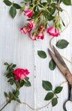 Ρόδινα τριαντάφυλλα για την ανασκόπηση Στοκ Φωτογραφίες