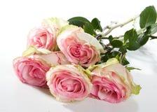 ρόδινα τριαντάφυλλα δεσμώ Στοκ φωτογραφίες με δικαίωμα ελεύθερης χρήσης