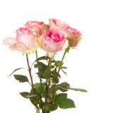 ρόδινα τριαντάφυλλα δεσμώ Στοκ εικόνα με δικαίωμα ελεύθερης χρήσης