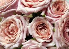 ρόδινα τριαντάφυλλα δροσιάς ανθοδεσμών στοκ εικόνες