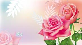 ρόδινα τριαντάφυλλα καρτώ&nu Στοκ εικόνα με δικαίωμα ελεύθερης χρήσης
