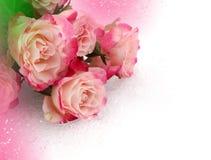 Ρόδινα τριαντάφυλλα λουλουδιών Στοκ Εικόνα