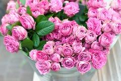 ρόδινα τριαντάφυλλα λου&l Στοκ φωτογραφίες με δικαίωμα ελεύθερης χρήσης