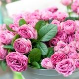 ρόδινα τριαντάφυλλα λου&l Στοκ εικόνες με δικαίωμα ελεύθερης χρήσης
