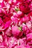 ρόδινα τριαντάφυλλα μαρμελαδών ανασκόπησης στοκ φωτογραφία με δικαίωμα ελεύθερης χρήσης