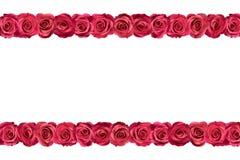 Ρόδινα τριαντάφυλλα στις σειρές 3 Στοκ Εικόνες