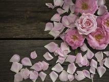 Ρόδινα τριαντάφυλλα στο ξύλινο διάστημα αντιγράφων στοκ εικόνα
