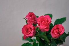 Ρόδινα τριαντάφυλλα στο υπόβαθρο θαμπάδων Στοκ Εικόνες
