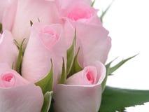 ρόδινα τριαντάφυλλα στοκ φωτογραφία με δικαίωμα ελεύθερης χρήσης