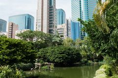 Ρόδινα φλαμίγκο στην αιχμή Βικτώριας του Χονγκ Κονγκ στοκ εικόνες