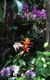 Ρόδινες ορχιδέες και πορτοκαλί Bromeliads σε έναν κήπο στοκ εικόνα
