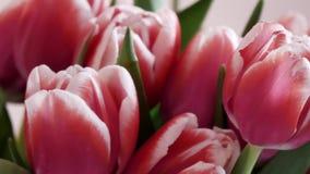 Ρόδινες τουλίπες λουλουδιών στο δωμάτιο φιλμ μικρού μήκους