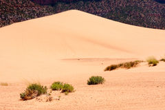 ρόδινη άμμος αμμόλοφων κορ&al Στοκ Φωτογραφίες