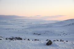Ρόδινη αυγή στο tundra παντού άσπρο χιόνι κανένα δρόμος στοκ φωτογραφίες