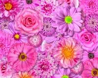 ρόδινη επιλογή λουλουδιών ανασκόπησης διάφορη Στοκ εικόνα με δικαίωμα ελεύθερης χρήσης