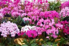 ρόδινη θάλασσα λουλουδιών Στοκ εικόνα με δικαίωμα ελεύθερης χρήσης