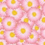 Ρόδινος αστέρας, άνευ ραφής υπόβαθρο λουλουδιών της Daisy επίσης corel σύρετε το διάνυσμα απεικόνισης Στοκ Εικόνες