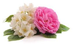 Ρόδινος αυξήθηκε και άσπρα λουλούδια στοκ εικόνα