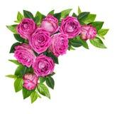 Ρόδινος αυξήθηκε λουλούδια και τα πράσινα φύλλα σε μια γωνία floral Στοκ εικόνα με δικαίωμα ελεύθερης χρήσης