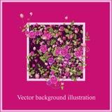 Ρόδινος αυξήθηκε λουλούδια με τα φύλλα Απεικόνιση υποβάθρου ελεύθερη απεικόνιση δικαιώματος