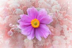 Ρόδινο άνθος japonica anemone Στοκ εικόνες με δικαίωμα ελεύθερης χρήσης