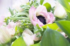 Ρόδινο γαλλικό anemone με το μαύρο κέντρο Στοκ εικόνες με δικαίωμα ελεύθερης χρήσης