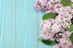 ρόδινο ιώδες λουλούδι στο μπλε ξύλινο υπόβαθρο Τοπ άποψη με το διάστημα αντιγράφων Στοκ Φωτογραφίες