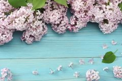 ρόδινο ιώδες λουλούδι στο μπλε ξύλινο υπόβαθρο Τοπ άποψη με το διάστημα αντιγράφων Στοκ φωτογραφίες με δικαίωμα ελεύθερης χρήσης