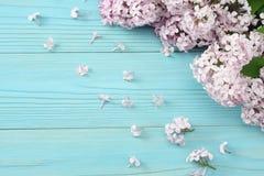 ρόδινο ιώδες λουλούδι στο μπλε ξύλινο υπόβαθρο Τοπ άποψη με το διάστημα αντιγράφων Στοκ Εικόνες