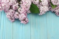 ρόδινο ιώδες λουλούδι στο μπλε ξύλινο υπόβαθρο Τοπ άποψη με το διάστημα αντιγράφων Στοκ εικόνες με δικαίωμα ελεύθερης χρήσης