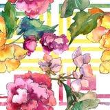 Ρόδινο και κίτρινο λουλούδι gardania Floral βοτανικό λουλούδι Άνευ ραφής πρότυπο ανασκόπησης Στοκ φωτογραφία με δικαίωμα ελεύθερης χρήσης