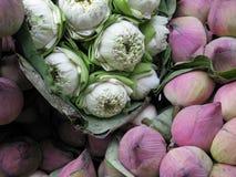 ρόδινο λευκό λωτού Στοκ Εικόνα