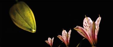 Ρόδινο λουλούδι ζουμ στοκ φωτογραφία