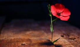 Ρόδινο λουλούδι μεταξύ των ξύλων στοκ φωτογραφία με δικαίωμα ελεύθερης χρήσης