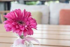Ρόδινο λουλούδι στο βάζο γυαλιού Στοκ Φωτογραφία
