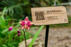 Ρόδινο λουλούδι της ορχιδέας Blume plicata Spathoglottis Στοκ φωτογραφίες με δικαίωμα ελεύθερης χρήσης
