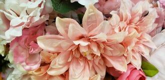 Ρόδινο μπούσελ των ανθών λουλουδιών στοκ εικόνες με δικαίωμα ελεύθερης χρήσης