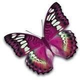 Ρόδινο πέταγμα πεταλούδων Στοκ Εικόνες
