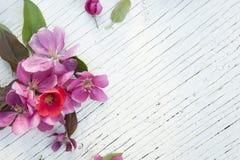 Ρόδινο πλαίσιο λουλουδιών άνοιξη τέχνης στο παλαιό άσπρο ξύλινο υπόβαθρο Στοκ Φωτογραφίες