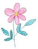 ρόδινο σκίτσο λουλουδ& απεικόνιση αποθεμάτων