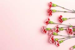 Ρόδινο υπόβαθρο με το διάστημα λουλουδιών και αντιγράφων γαρίφαλων Τοπ όψη Στοκ Εικόνες