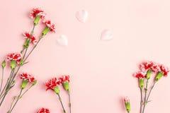 Ρόδινο υπόβαθρο με το διάστημα λουλουδιών και αντιγράφων γαρίφαλων Τοπ όψη Στοκ Φωτογραφία